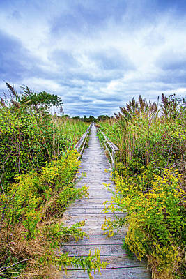 Photograph - Quogue Goldenrod Walkway by Robert Seifert