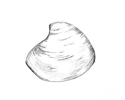 Maine Beach Drawing - Quohog Shell by Jeff Greiner