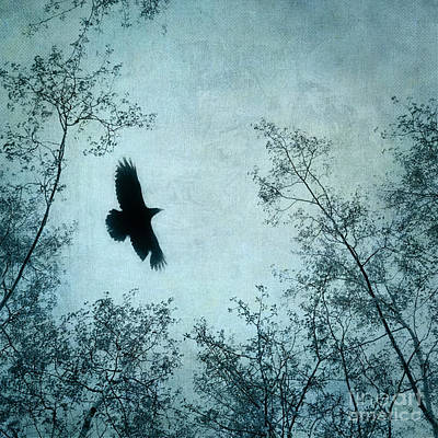 Blackbird Wall Art - Photograph - Spread Your Wings by Priska Wettstein