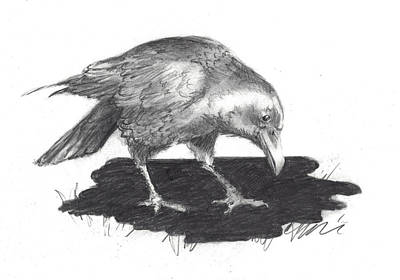 Drawing - Raven - Reflecting by Jacki Kellum