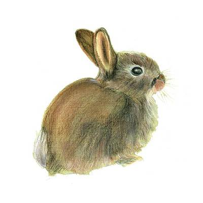 Painting - Rabbit  by Alison Langridge