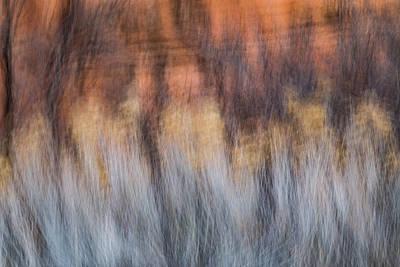Photograph - Rabbit Brush And Tamarisk Tango by Deborah Hughes