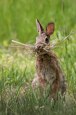 Photograph - Rabbit Collector  by Terry DeLuco