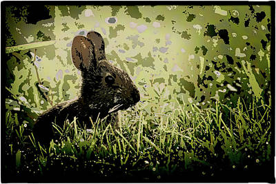 Photograph - Rabbit In Meadow by Richard Goldman