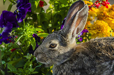 Photograph - Rabbit In Paradise by John Brink
