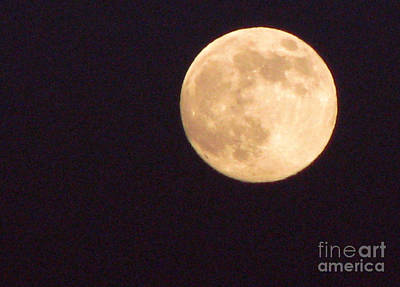 Art Print featuring the photograph Rabbit In The Moon by Phyllis Kaltenbach