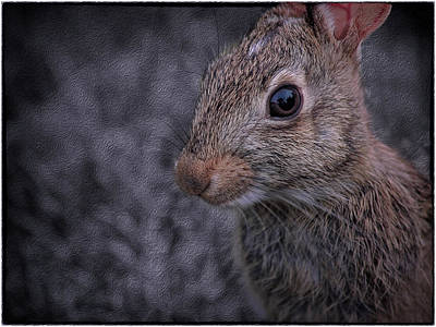 Photograph - Rabbit by Phil Cardamone