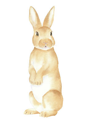 Painting - Rabbit Watercolor by Taylan Apukovska