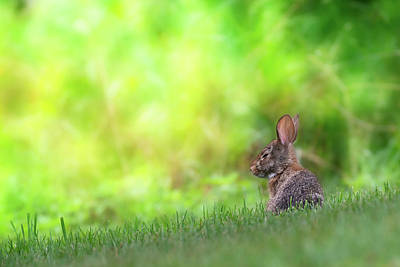Photograph - Rabbit Zen by Bill Wakeley