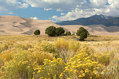 Photograph - Rabbitbrush And Dunes by Frank Townsley