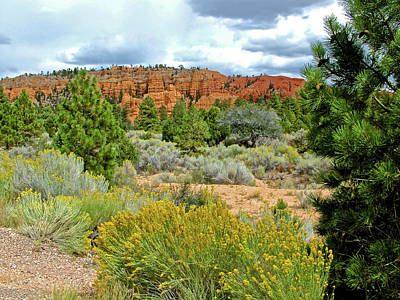 Photograph - Rabbitbrush In Red Canyon In Dixie National Forest, Utah  by Ruth Hager