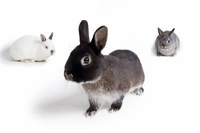 Photograph - Rabbits by Corey Hochachka