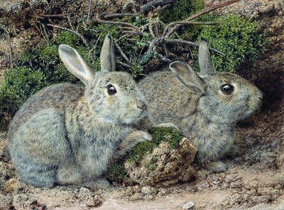 March Hare Painting - Rabbits by John Sherrin