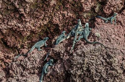 Photograph - Rabida Marine Iguanas by Harry Strharsky