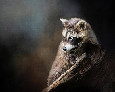 Raccoons Digital Art - Raccoon Baby by Susan Carter