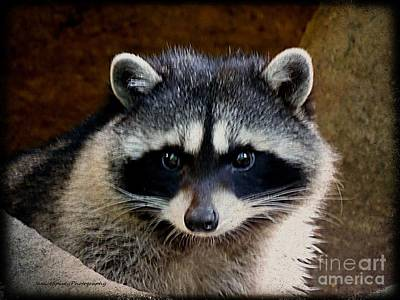 Photograph - Raccoon by Janice Spivey