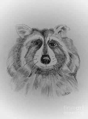 Drawing - Raccoon by Maria Urso
