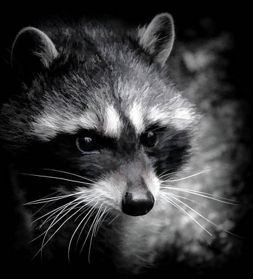 Photograph - Raccoon Mask by Athena Mckinzie