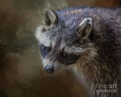 Photograph - Raccoon Portrait by Eva Lechner