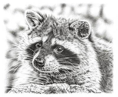 Animals Drawings - Raccoon by Remrov