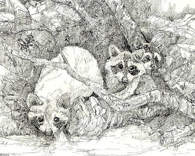 Drawing - Raccoons 1980 by Lizi Beard-Ward