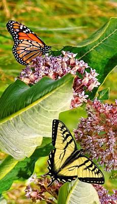 Photograph - Rachelle's Butterflys by Peg Runyan