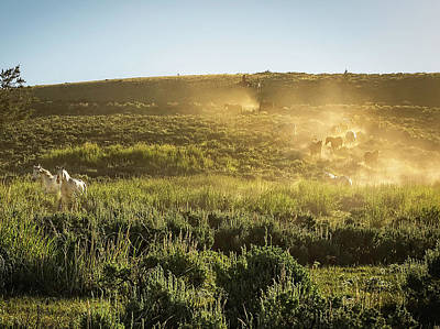 Photograph - Racing For Pasture At Absaroka Ranch, Wyoming by Kay Brewer