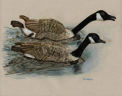 Canadian Geese Drawing - Racing Geese by Cynthia  Lanka