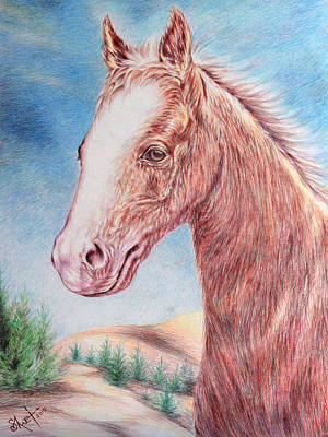 Horse Lovers Drawing - Racing Horse by Shwet Pradhan