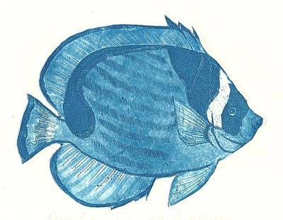 Racoon Butterflyfish Art Print by Cynthia Conklin