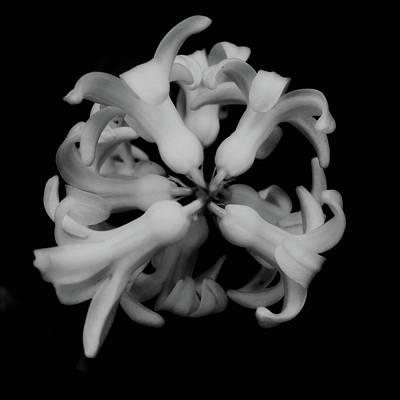 Photograph - Radial by Marcus Hammerschmitt