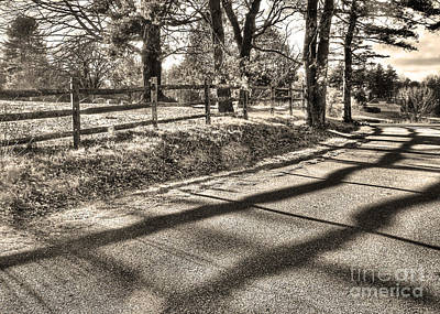 Art Print featuring the photograph Radiance by Betsy Zimmerli