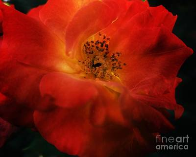 Photograph - Radiant Beauty by Maria Urso