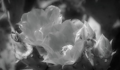 Photograph - Radiant Black And White Orange Prickly Pear Blossoms by Aimee L Maher Photography and Art Visit ALMGallerydotcom