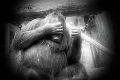 Orangutan Photograph - Radiant Black And White Peek A Boo by Aimee L Maher Photography and Art Visit ALMGallerydotcom