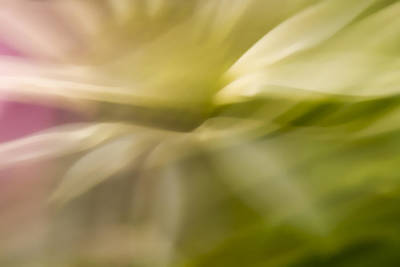 Photograph - Radiant Coneflower by Margaret Denny