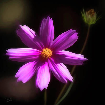 Photograph - Radiant Cosmos by Teresa Wilson