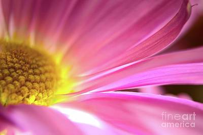Photograph - Radiant Glory by Chad and Stacey Hall