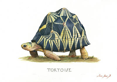 Turtle Wall Art - Painting - Radiated Tortoise  by Juan Bosco