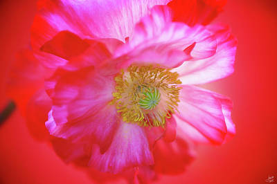 Photograph - Radiating Warmth by Lisa Knechtel