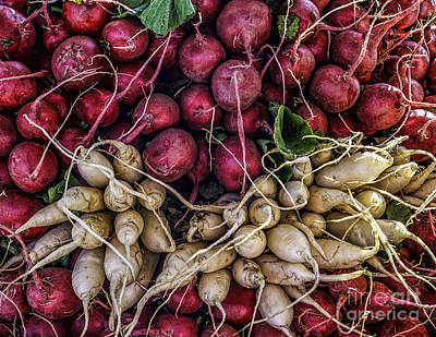 Photograph - Radishes At The Market by Nick Zelinsky