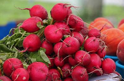 Photograph - Radishes by Michiale Schneider