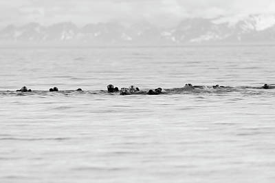 Photograph - Raft Of Otters by Gloria Anderson
