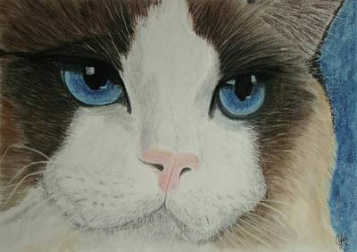 Wall Art - Painting - Blue Eyes by Cybele Chaves