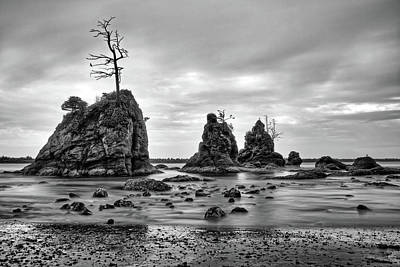 Photograph - Ragged Beach Tree by Jedediah Hohf