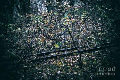 Photograph - Rail by Ana Mireles