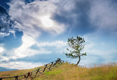 Photograph - Rail Fence And A Tree by Philip Rispin