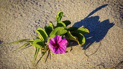 Photograph - Railroad Vine Flower Delray Beach Florida by Lawrence S Richardson Jr
