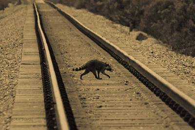 Railroad Bandit Print by DigiArt Diaries by Vicky B Fuller