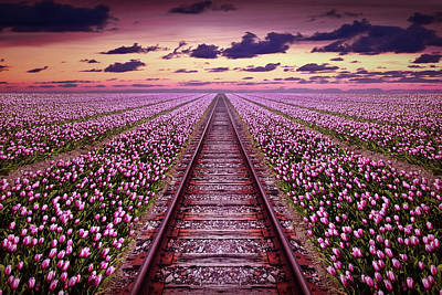 Photograph - Railway In A Purple Tulip Field by Mihaela Pater